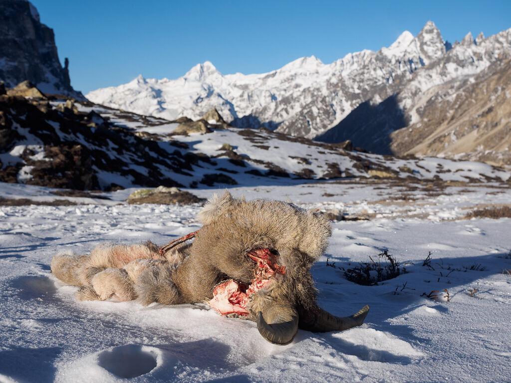 Kanchenjunga North - Pangpema